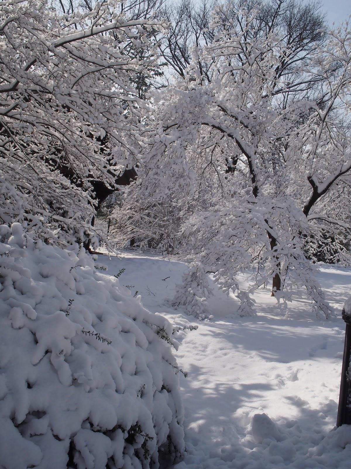 Winter Wonderland, #centralpark #nyc #snow 2013