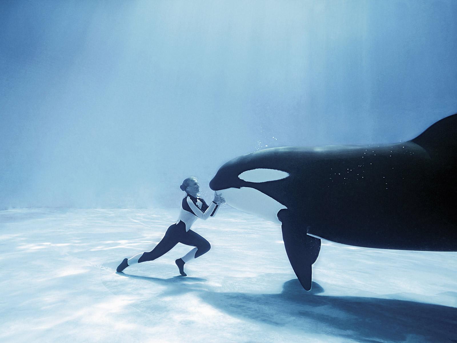 Animal unique killer whale for Sfondilandia mare