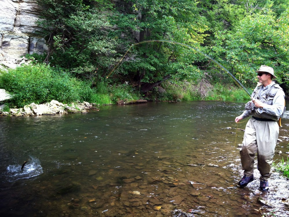 Jeff picking up a brown trout on The Trout Fisher by Hardy Fly Rods on a Southeast Minnesota stream.