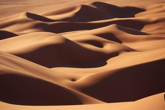 beting-pasir-gurun-sahara