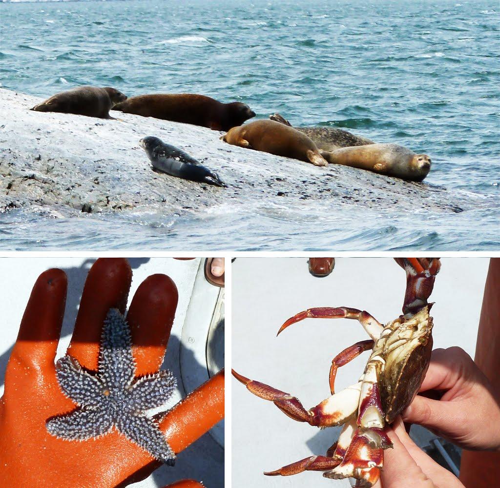 http://4.bp.blogspot.com/-NoK_v-J3eUQ/Tf-grkacXQI/AAAAAAAACg8/fWMoKbBEwuM/s1600/lobster_boat_10.jpg