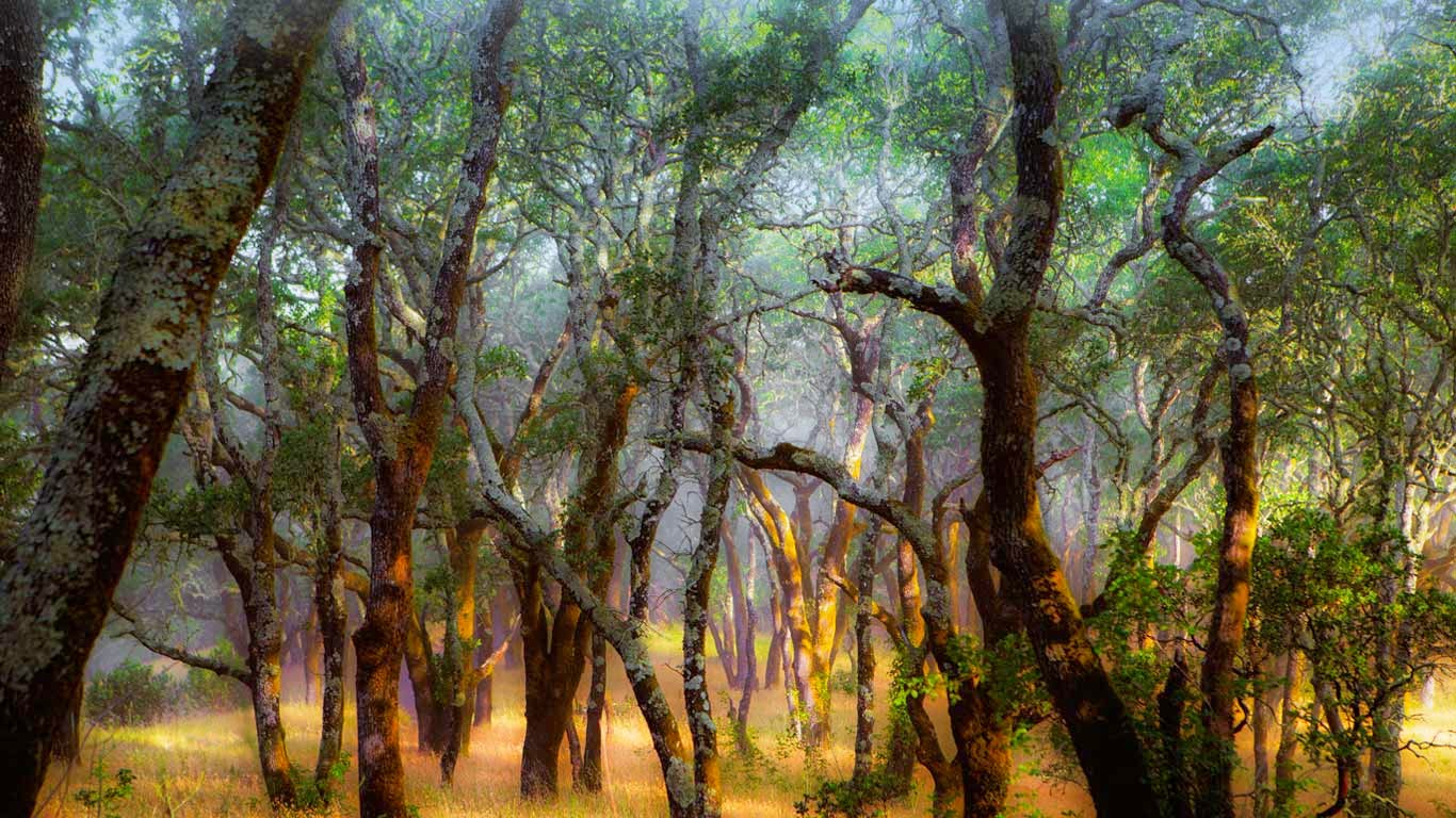 Foothill Regional Park near Windsor, California (© Ron Koeberer/Tandem Stills + Motion) 576