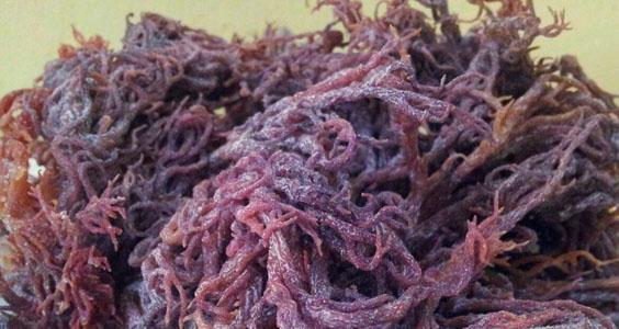 Pure Marine Collagen | Kolagen Asli Rumpai Laut