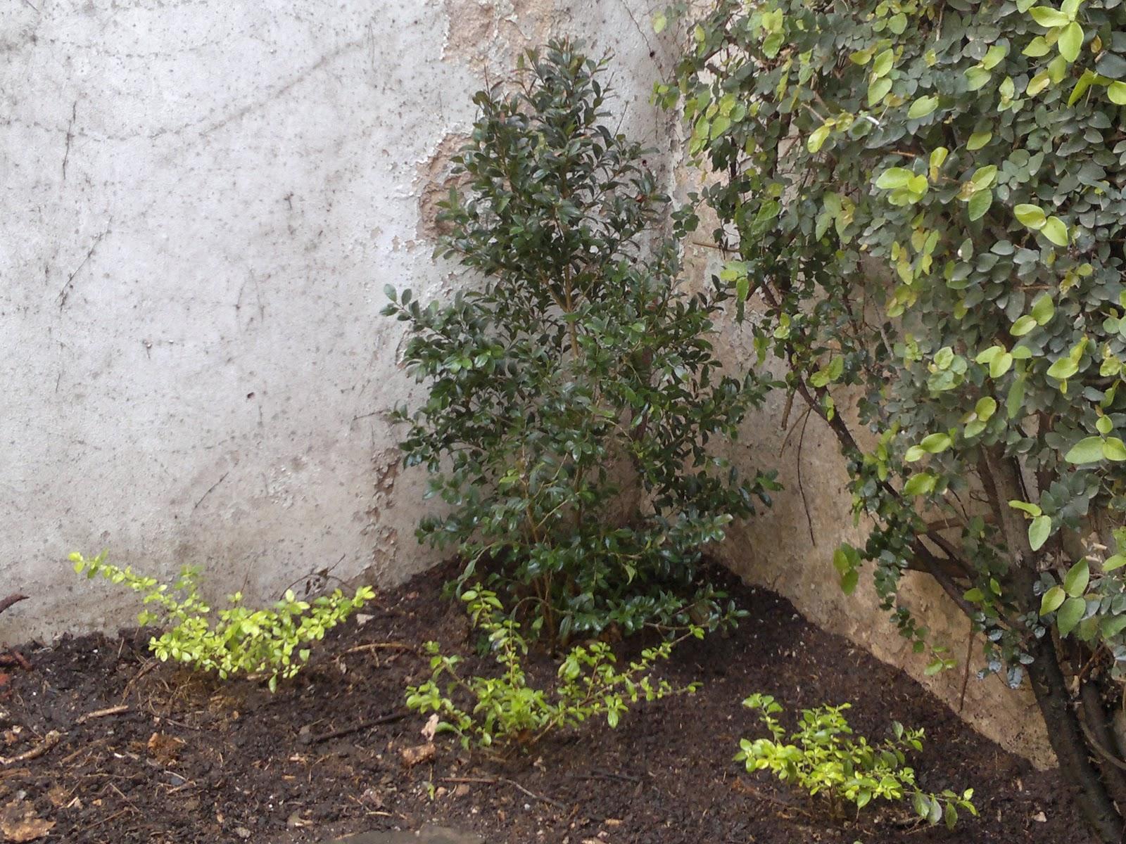 T cnico en jardiner a mantenimiento dise o en canteros for Tecnico en jardineria