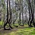 Misteri Pokok Tumbuh Benggkok