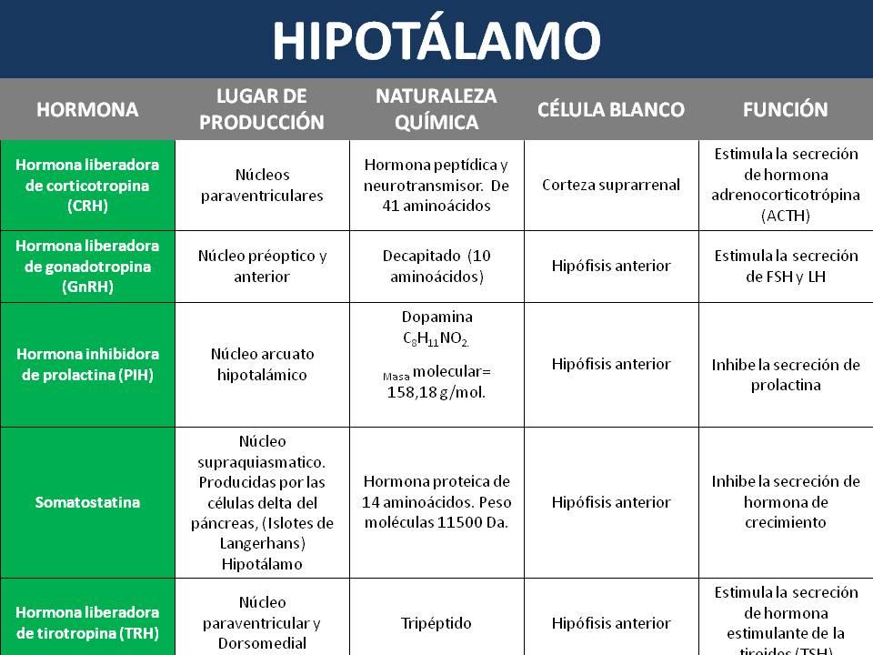 Hipot lamo fisiolog a humana