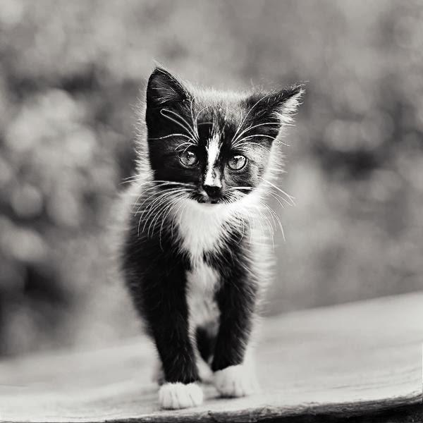 Cute Photography by Magda Kolakowska