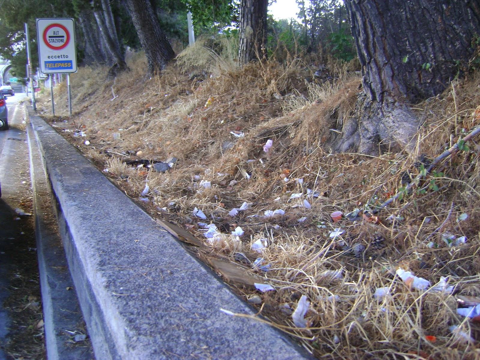 Tardi la sera presto la mattina si taglia l 39 erba ma non for Erba per prato che non si taglia