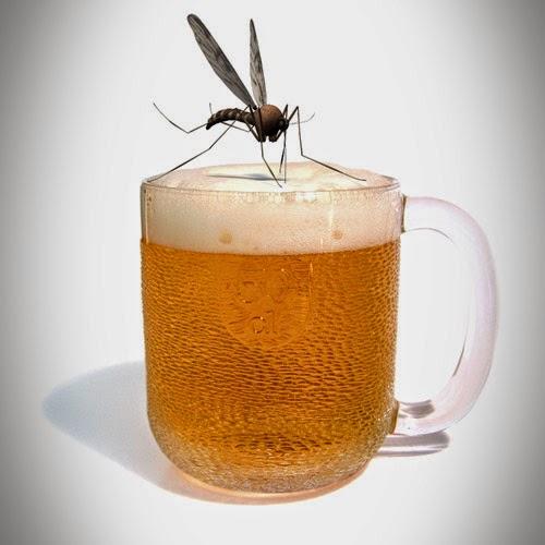 chikungunya-tomar-alcohol-beber-licor-puedo