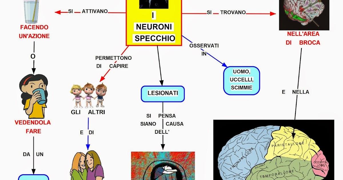 Mappa concettuale neuroni specchio - Neuroni a specchio ...