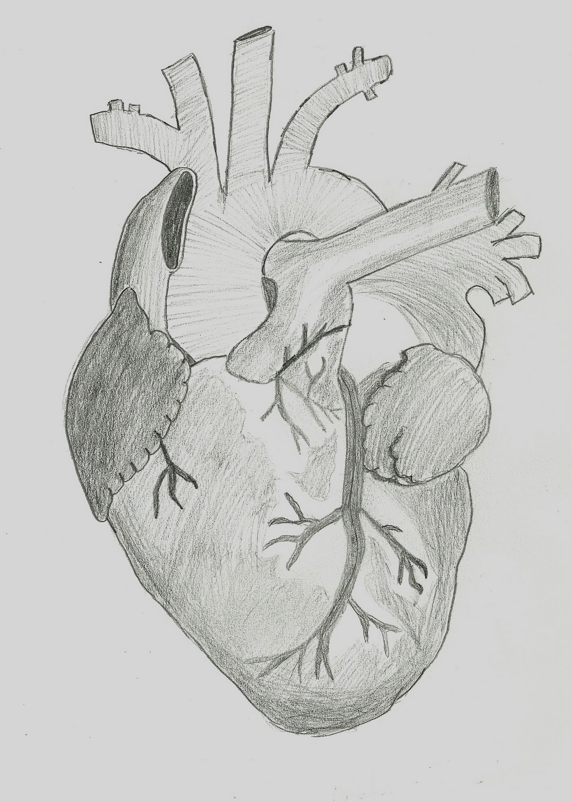 Words Travel Anatomical Heart Drawing