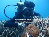 paket wisata diving 2 hari di karimunjawa