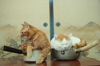 Foto Shironeko Kucing Termalas di Dunia 02