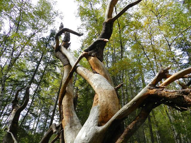 Змей Горыныч в национальном парке Зюраткуль