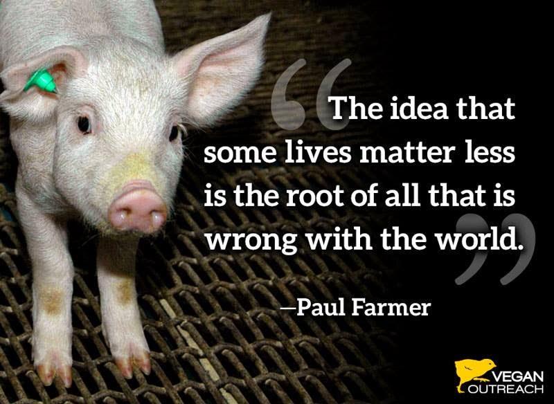 Vegan Adventures Inspiring Vegan Quotes Awesome Vegan Quotes