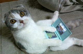 Cute adorable cat kitten playing video games Nintendo DS white/grey gamer animal