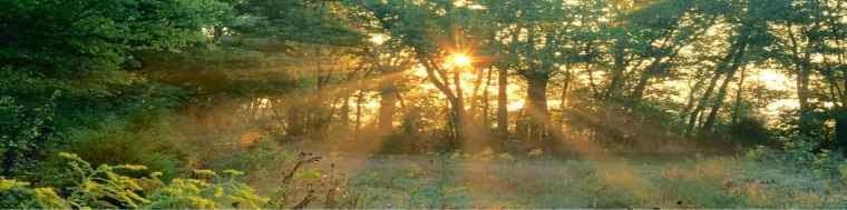 El bosque de punto de cruz
