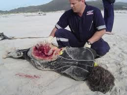 Great White Shark Attack Victims