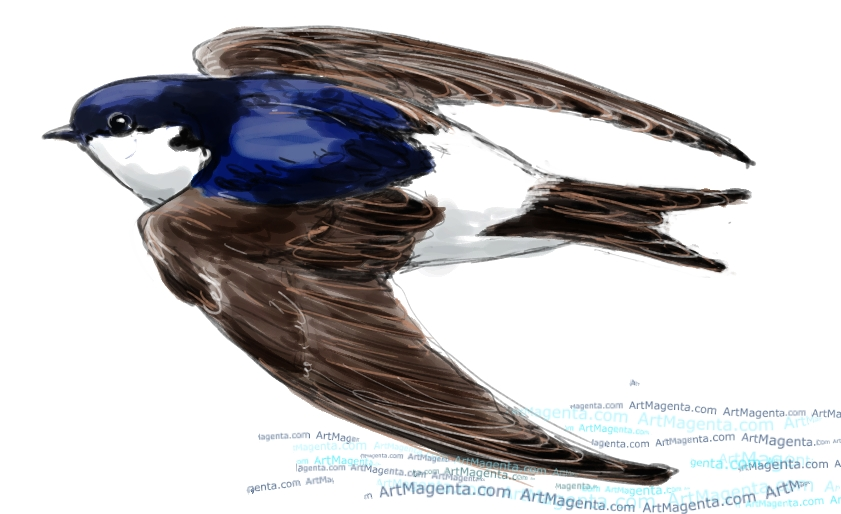 House Martin sketch painting. Bird art drawing by illustrator Artmagenta