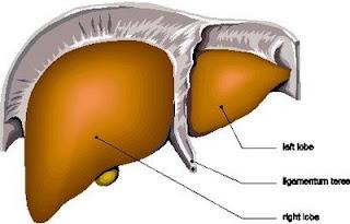 Hepatitis fulminante e cirrosis