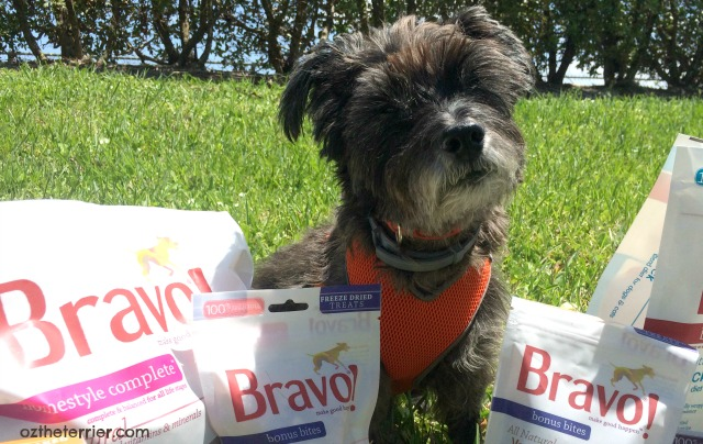 Oz the Terrier says thank you to Bravo Pet Foods raw diet for dogs