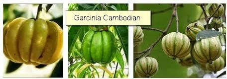 Garcinia%2BCambodian%2Bbenefits%2Bweight