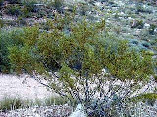 Inilah 6 Tumbuhan paling tua di dunia