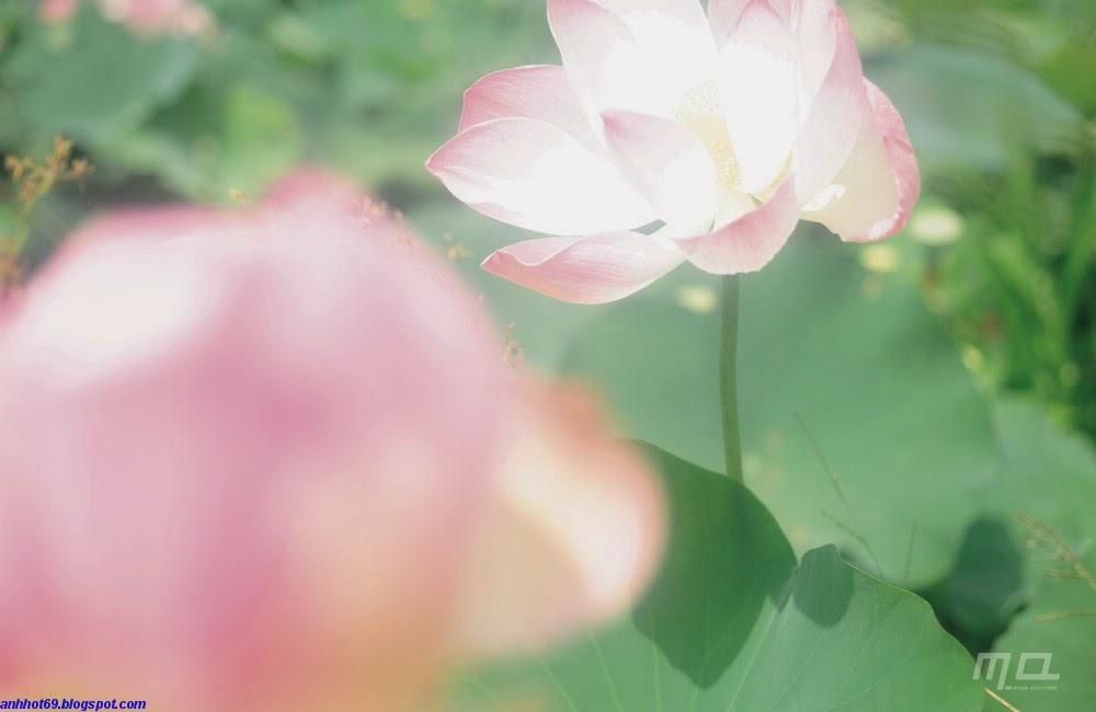 rei-yoshii-01378660
