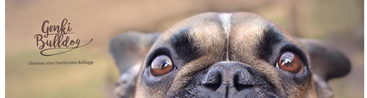 ♡ GENKI BULLDOG - Hundeblog ♡