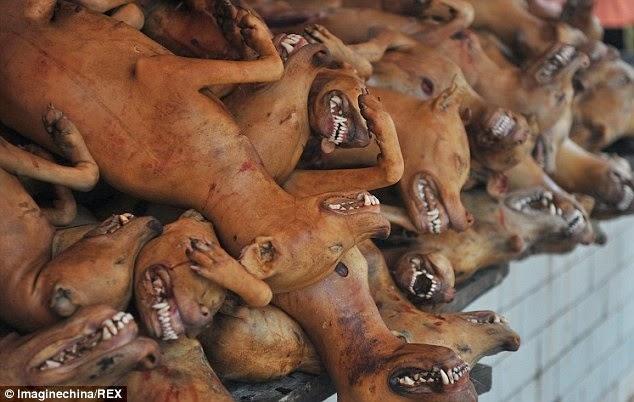 Perros sacrificados en China en los mostradores