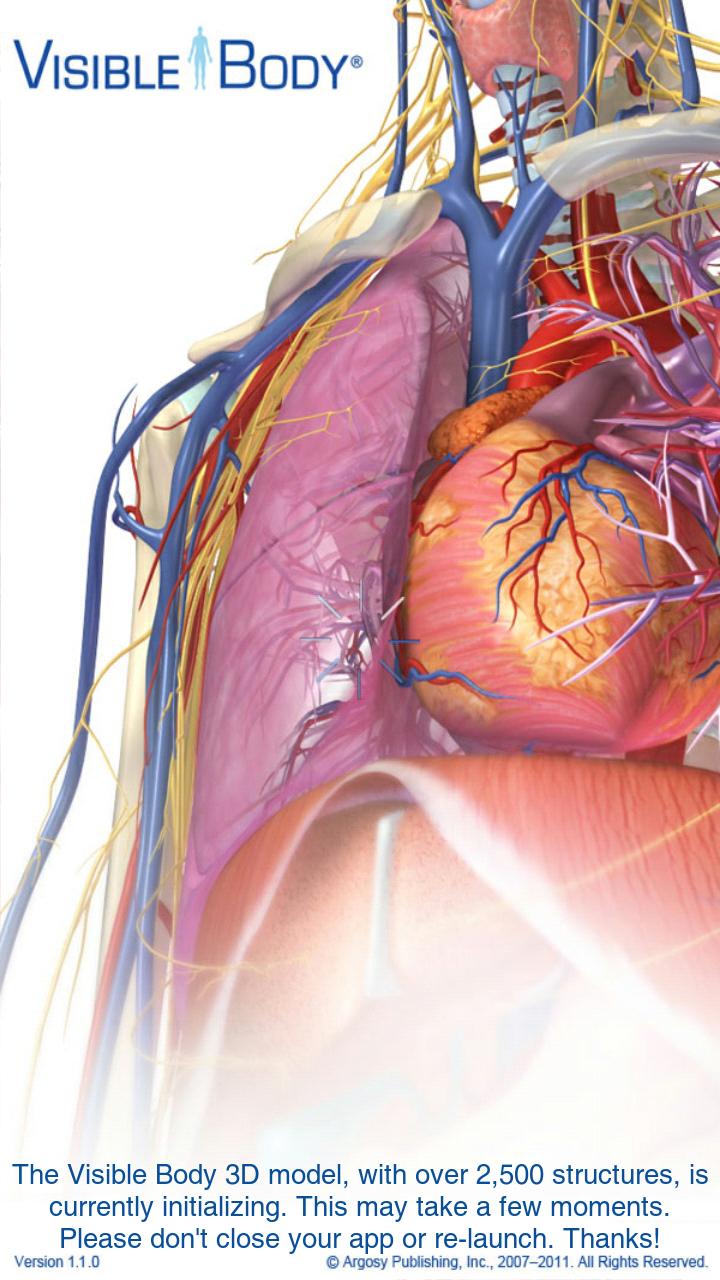 Atlas of human anatomy torrent