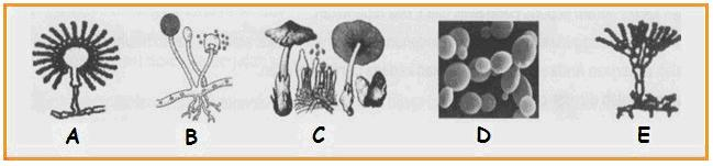 Biologi: Latihan 1