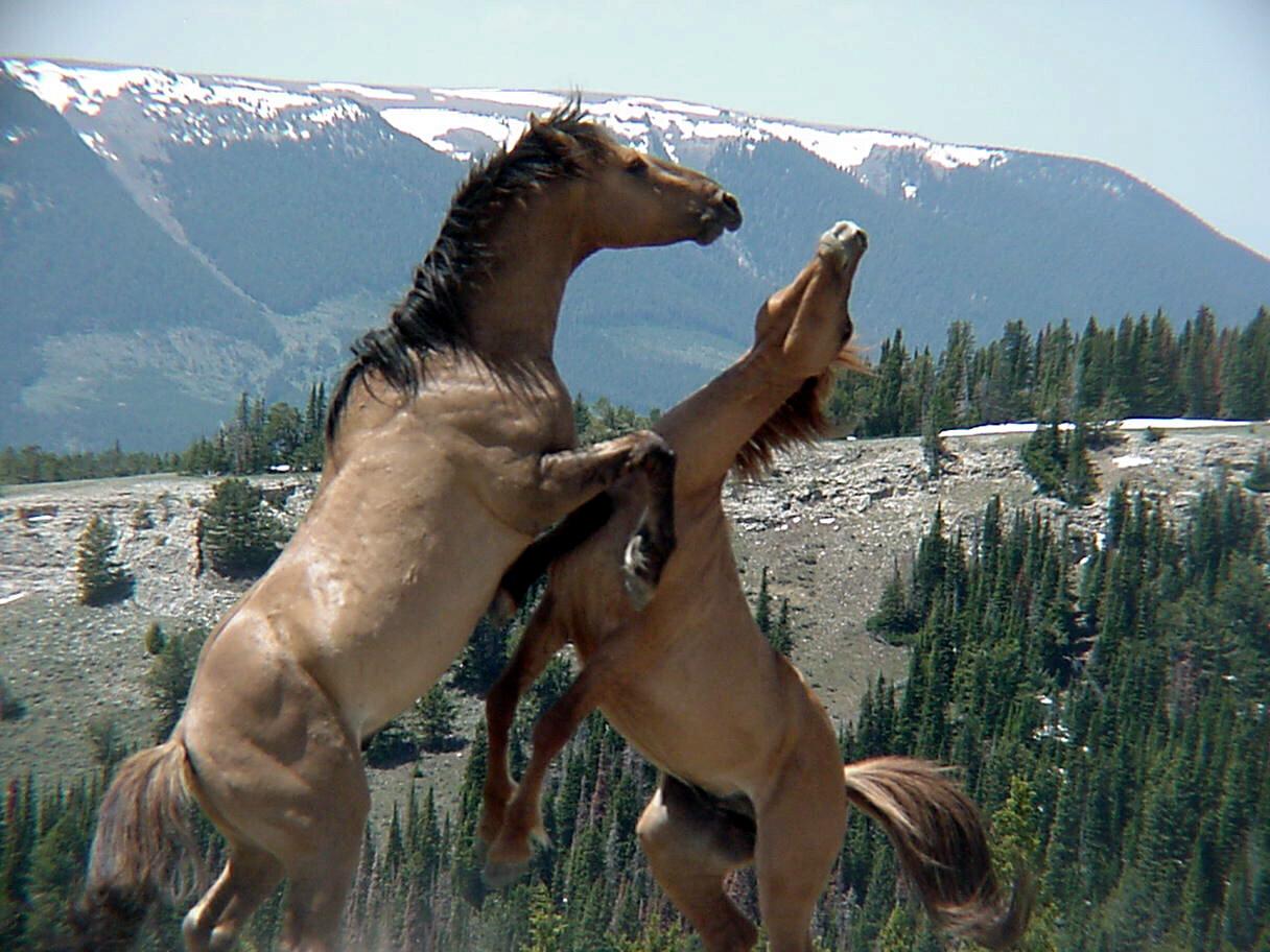 http://4.bp.blogspot.com/-NshalZC1fpc/TaP-yrgCIwI/AAAAAAAAAZ8/4LNQ99oTxuQ/s1600/wild-horse.jpg