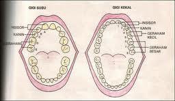Honeyhaniyati Set Gigi Susu Dan Gigi Kekal