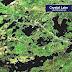 Crystal Lake - Crystal Lake Ontario
