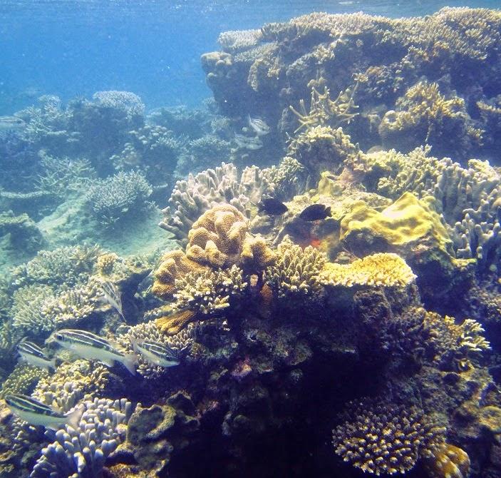 Daftar Lokasi Tempat Wisata Tour di Karimun Jawa