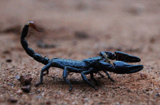 Horoscope : Scorpion