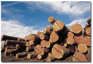 lumber cost