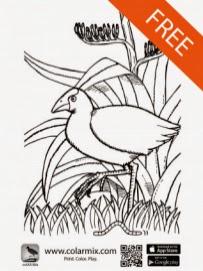 http://colarapp.com/wp-content/uploads/2014/07/Puteko-demobook-8Jul14-colarmix-imageprint_final1_Pukeko.pdf