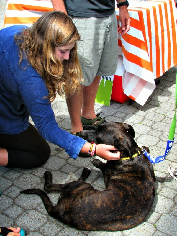 Jack London Square // East Bay SPCA Adoptathon Brindle Pitbull