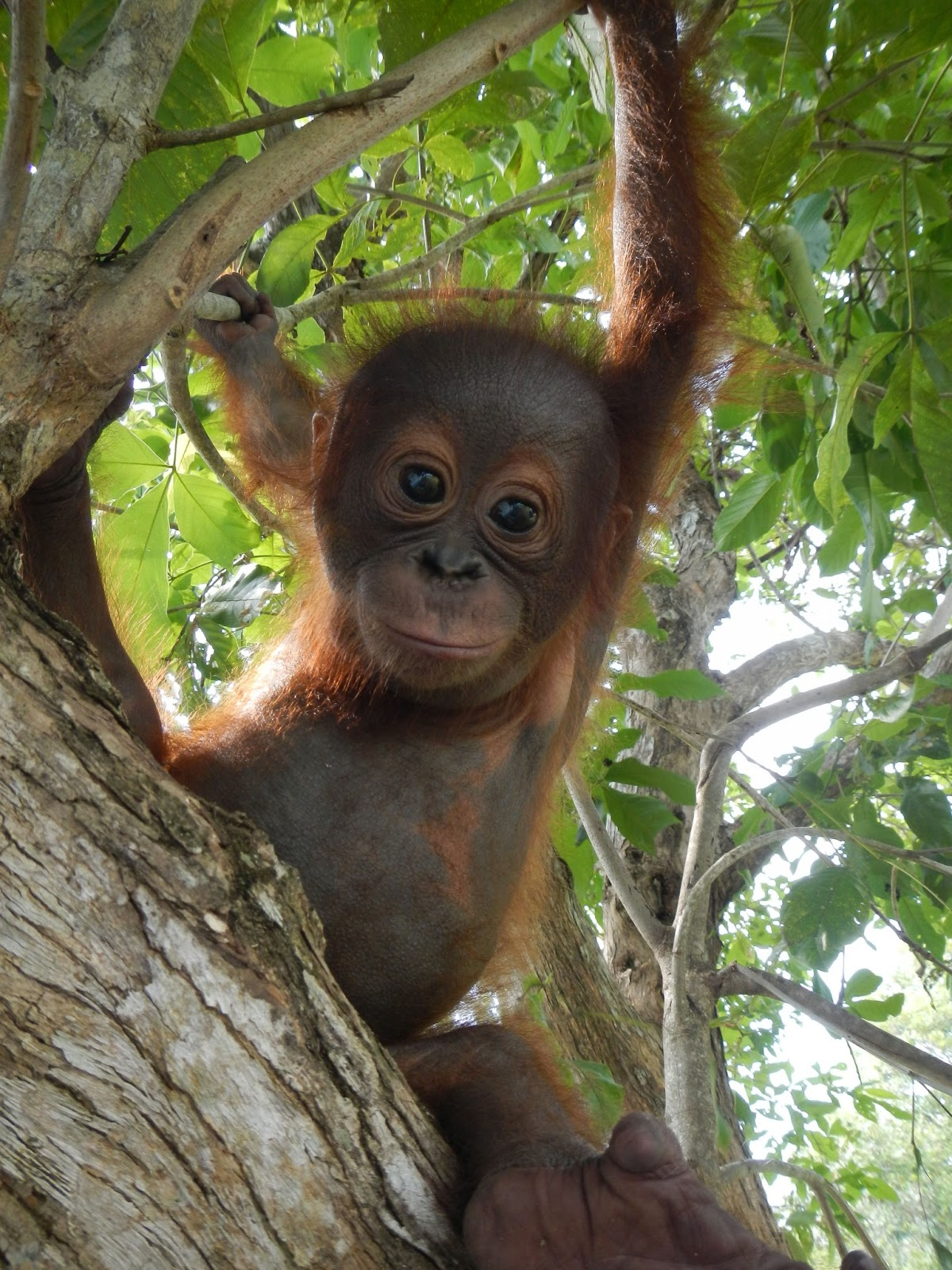 Little Onyo is bold and brave out in the safety of the forest enclosure