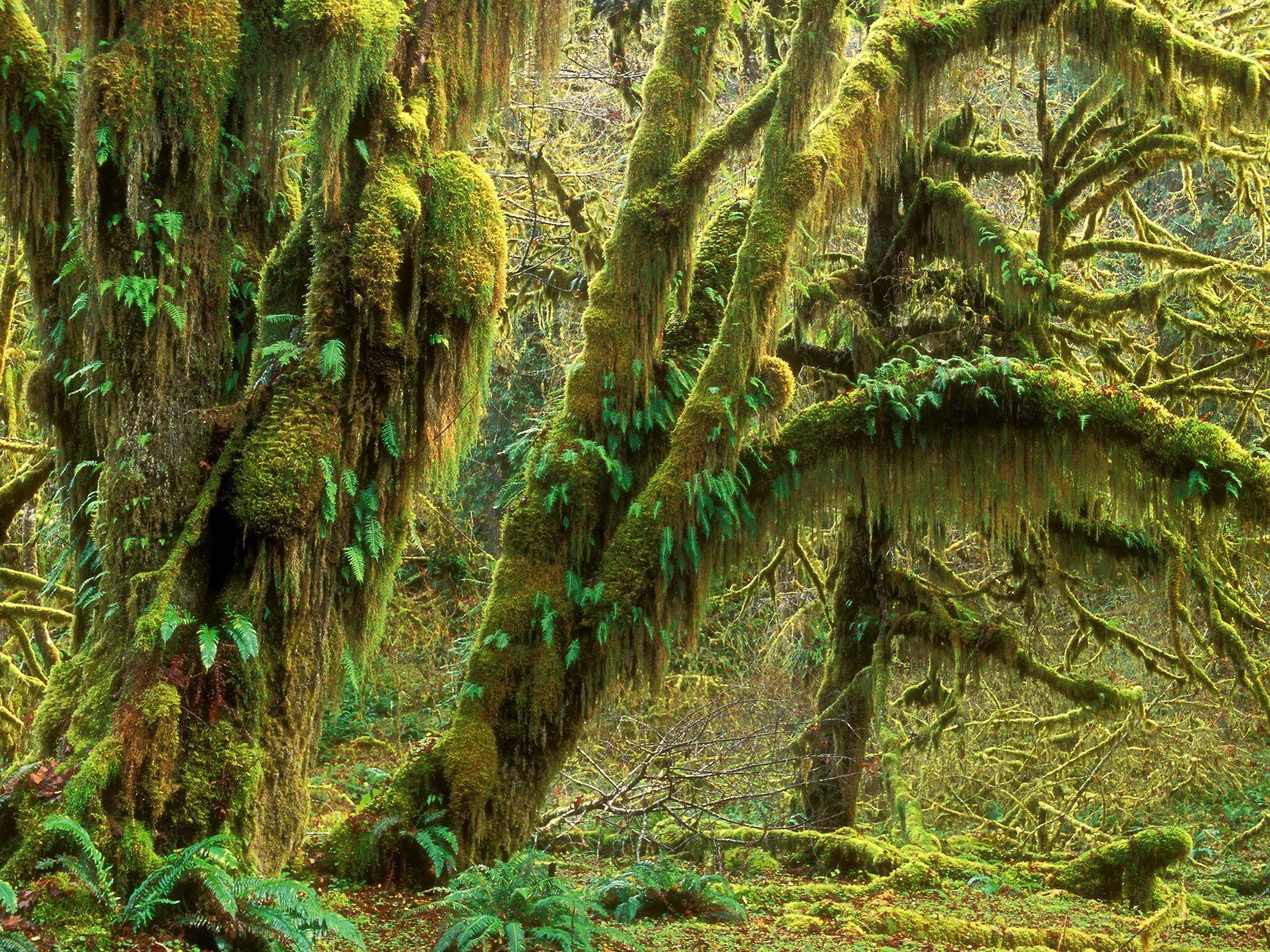 Zodiac Movie Lake Scene Beautiful Rainforest B...