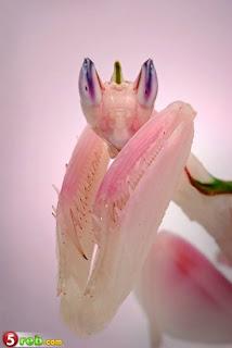 أجمل الحشرات العالم   أجمل الحشرات العالم أجمل الحشرات