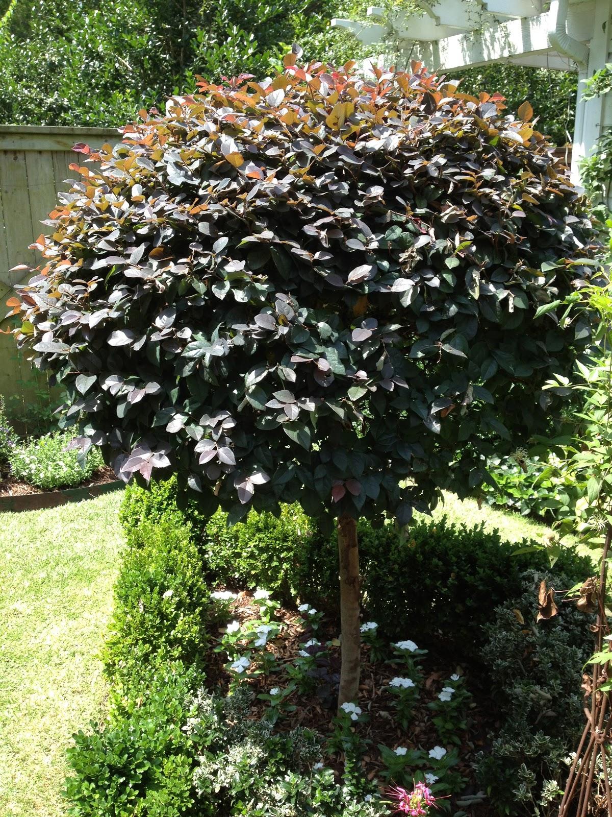 Garden musings from memphis area master gardeners for Garden trees memphis