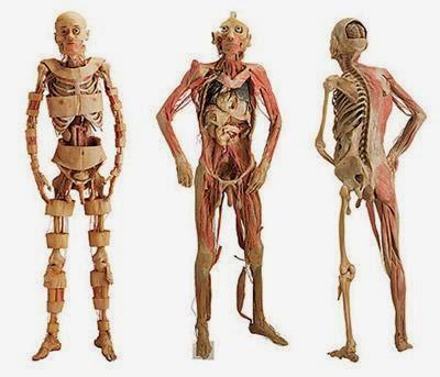 Morfo-fisiología 1: GENERALIDADES DE LA ANATOMÍA