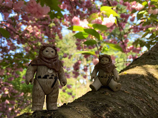 Ewoks at Stein Your Florist Co.