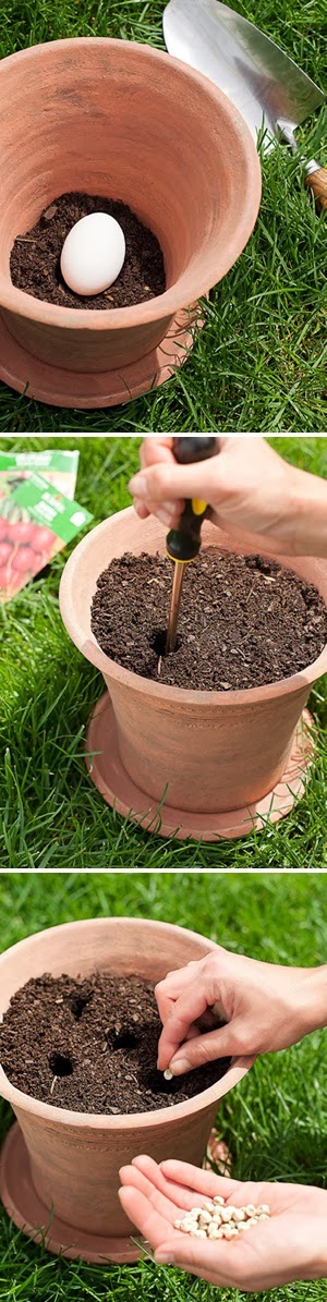natural fertilizer to grow mustard plant Spread the fertilizer beside the plants the fertilizer bag, is especially needed to grow good turnip roots how to grow turnip greens and mustard greens.