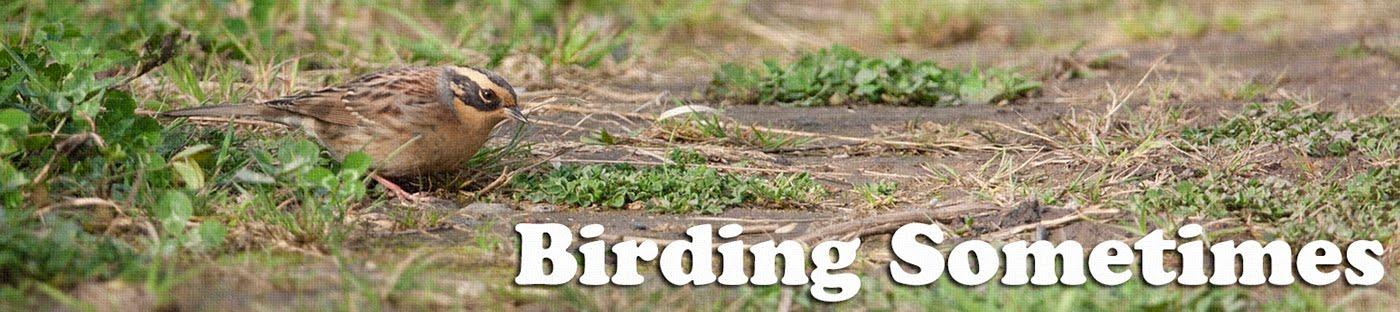 Birding Sometimes