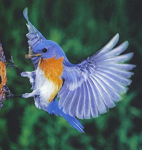 %D8%B7%D9%8A%D9%88%D8%B18 صور رمانسية طبيعية لأجمل الطيور 2014