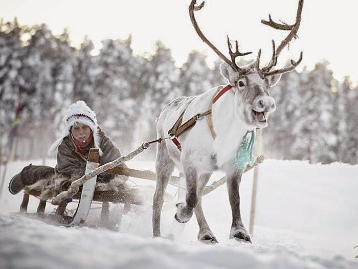 sami winter market and living in a snowball in jokkmokk  sweden - snow addiction